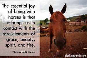 Horse Quotes and Cowgirl Quotes... with some Cowboy Quotes ...