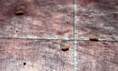 maggots on kitchen floor with maggots 2summers 7312