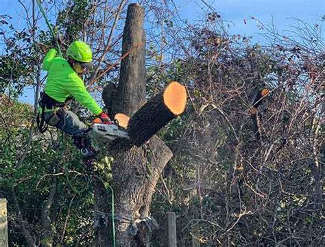 tree removal services  charleston sc local tree