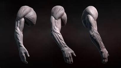 Zbrush Arms Human Sculpting Tutorial