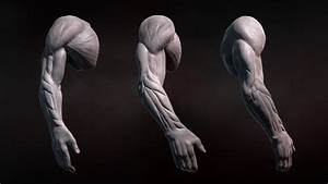 Zbrush Tutorial  Sculpting Human Arms In Zbrush