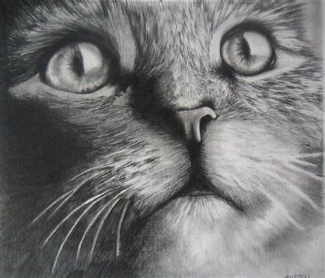 drawing animals realistic google zoeken kleurplaten