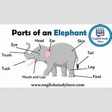 Parts Of An Elephant Vocabulary  English Study Here