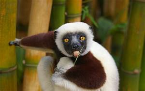 60 Beautiful an... Cute Animals