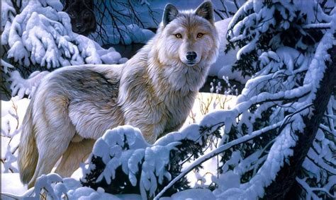 Beautiful Wolf Wallpaper Computer by Wolf Wallpapers Hd Free For Desktop Pc Collections