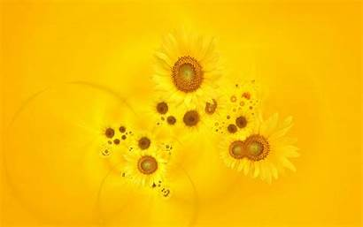 Yellow Bright Sunflowers Flower Backgrounds Flowers Wallpapers