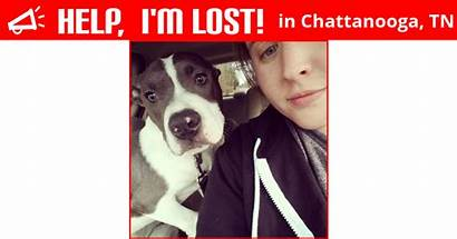 Lost Chattanooga Dog Tennessee