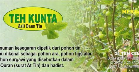 produksi budidaya buah tin indonesia pusat budidaya