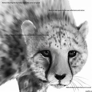 How To Draw A Cheetah Easy To Follow Steps To Make A
