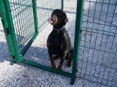recinzioni per gatti giardino recinzioni cani recinzioni come realizzare le