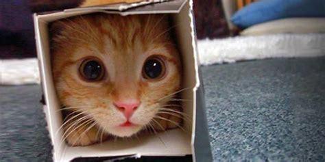 katzenspielzeug basteln ideen katzenspielzeug kaufen oder selber basteln