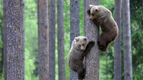 Wildlife Wallpaper Forest