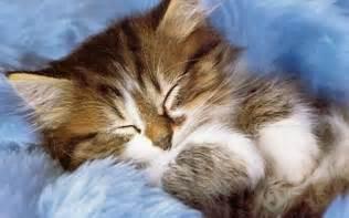 cat for free kitten kittens wallpaper 16122136 fanpop