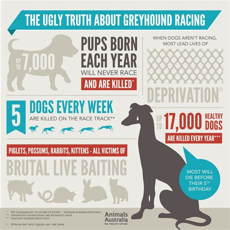 greyhound racing animals australia