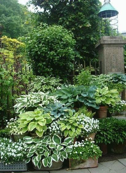 Plants Shade Horr Pindes Backyard