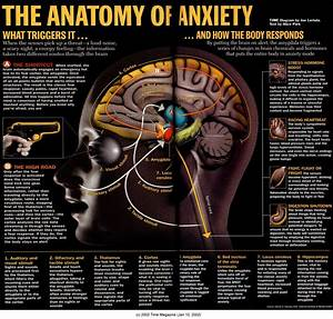 The Anatomy Of Anxiety   Interestingasfuck