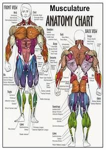 Anatomy Of The Human Body Appendix