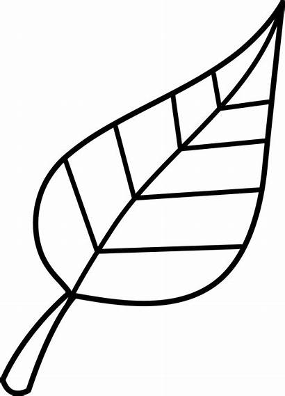 Outline Leaf Clipart Clip Clipartion