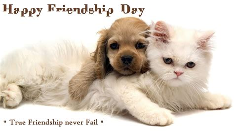 Happy Wallpaper Cats And Dogs by 2018 Friendship Day Wishes Quotes Sms Sayings Messages