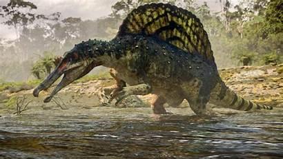 Dinosaur Spinosaurus Rex Carnotaurus Background Cartoon Hdwallpaperbackgrounds