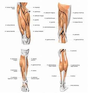 Diagram Quadriceps Strengthening Exercises Isometric ...