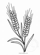 Wheat Template Coloring Grain Whole Symbol Easter sketch template