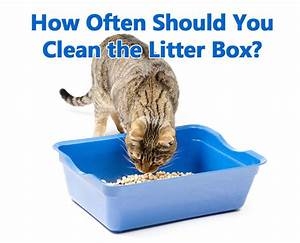 litterbox booda dome covered litterbox multiple colors With why should you concern on litter box cover