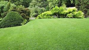 Lawn care vancouver guide and important information for for Garden care