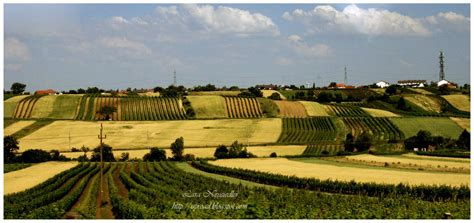 uproad  gold  burgenland