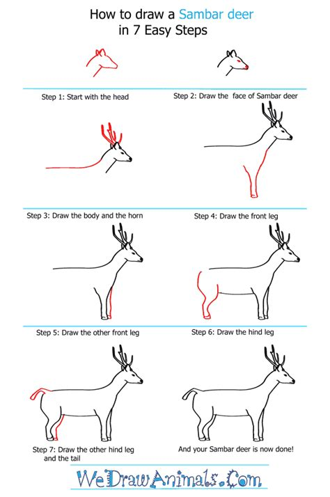 draw  sambar deer