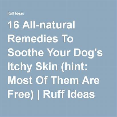 Itchy Dog Skin Remedies Natural