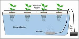 Diagram Of A Deep Water Culture  Dwc  Hydroponic System