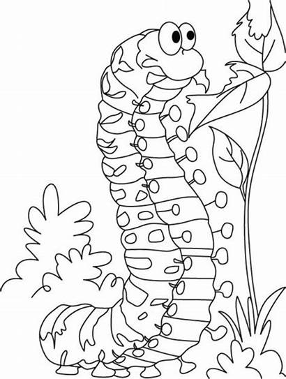 Caterpillar Coloring Hungry Pages Very Butterfly Satisfying