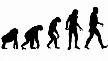 Evolution Darwin Theory Scientists Charles Ape Decode