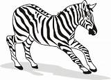 Zebra Coloring Pages Printable Animal Zebras Drawing Animals Pdf Cartoon Cute Head Baby Clipart Getcoloringpages Getdrawings Horse sketch template