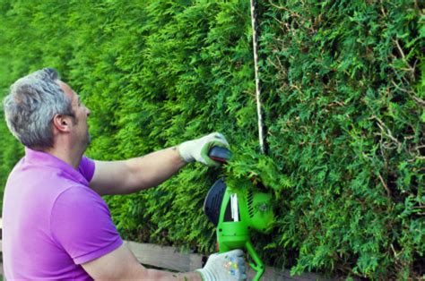how to trim a bush how to trim bushes with an electric trimmer