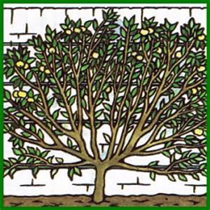Exotische Früchte Im Eigenen Garten : obstbaum anbauen und im eigenen garten fr chte ernten ~ Lizthompson.info Haus und Dekorationen