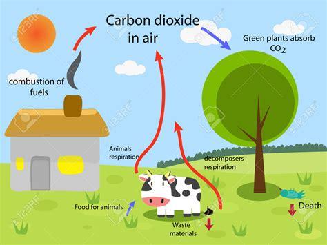 Diagram Carbon Dioxide Oxygen Cycle Diagram