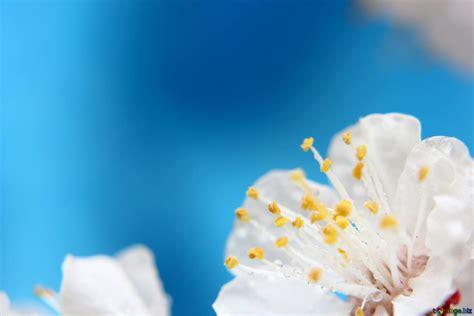 sfondi fioriti sfondo con rami fioriti di alberi primavera fiore sfondo