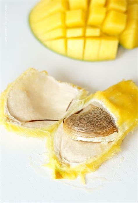 mango selber ziehen mangopflanze selber ziehen kert garten pflanzen mango