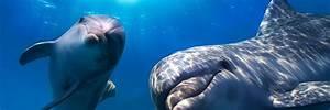 dolphin wallpaper underwater - HD Desktop Wallpapers | 4k HD
