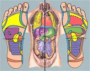 Reflexology Foot Chart Back Reflexology Certification Program Ontario Ingham Method