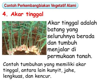 bab perkembangbiakan tumbuhan