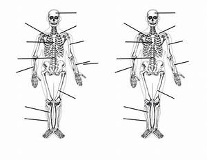 Skeletal System By Blueskiesmev - Teaching Resources
