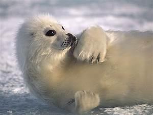 Arctic Ocean Animals |See N Explore World