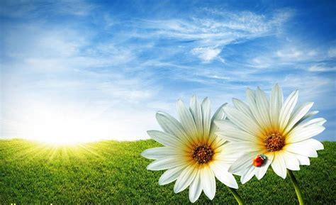 beautiful scenery flower images free dwonload hd wallpaper