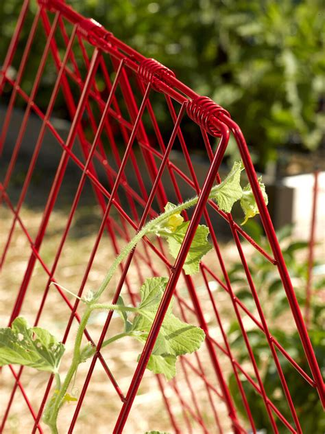 deluxe cucumber trellis gardeners supply