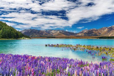 lake tekapo town   south island  zealand spring