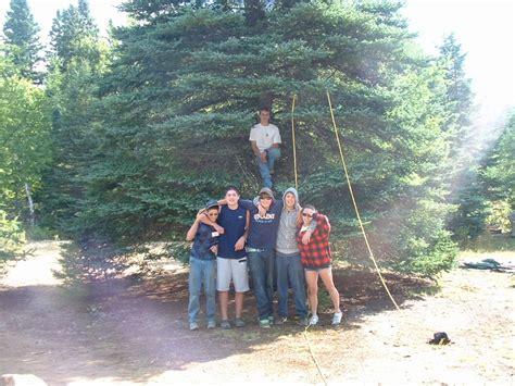 Jmg 10 Tree Triangle Lj