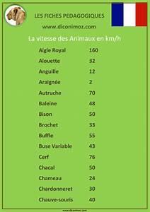 Vitesse Des Animaux : la vitesse des animaux dictionnaire des animaux diconimoz ~ Medecine-chirurgie-esthetiques.com Avis de Voitures